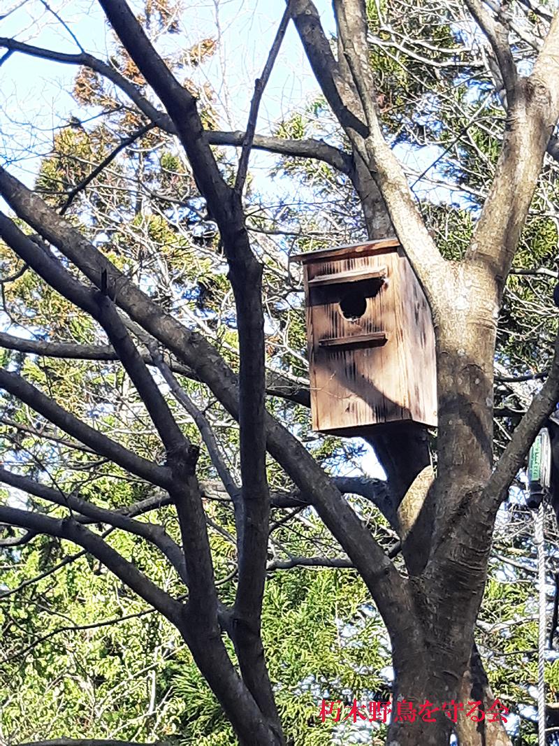 ブッポウソウ用巣箱設置