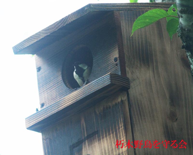 朽木野鳥を守る会 巣箱