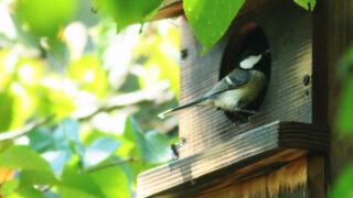 朽木野鳥を守る会